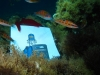 Under the Sea Bob